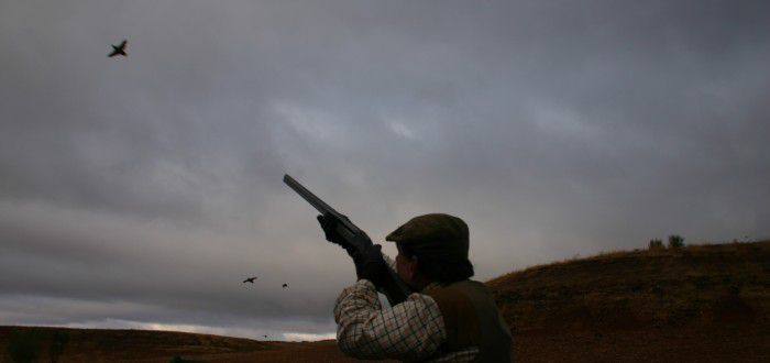 red-legged partridge hunt in Spain