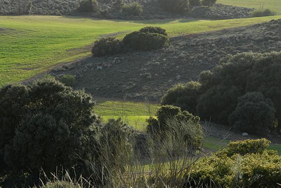 Coto-perdiz-roja-El-Crespo