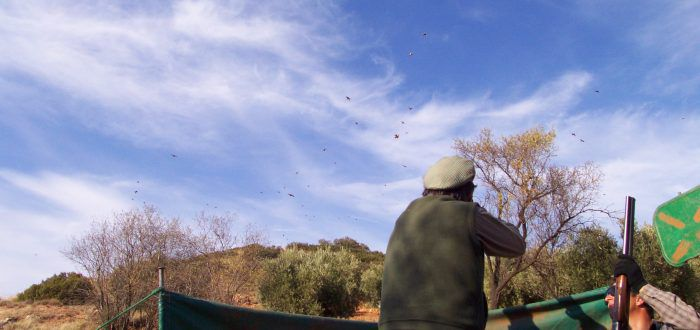 ojeo de perdices en España